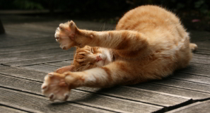 stretching-cat