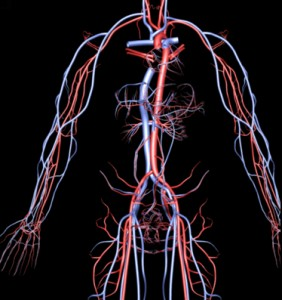 arteries_veins_01